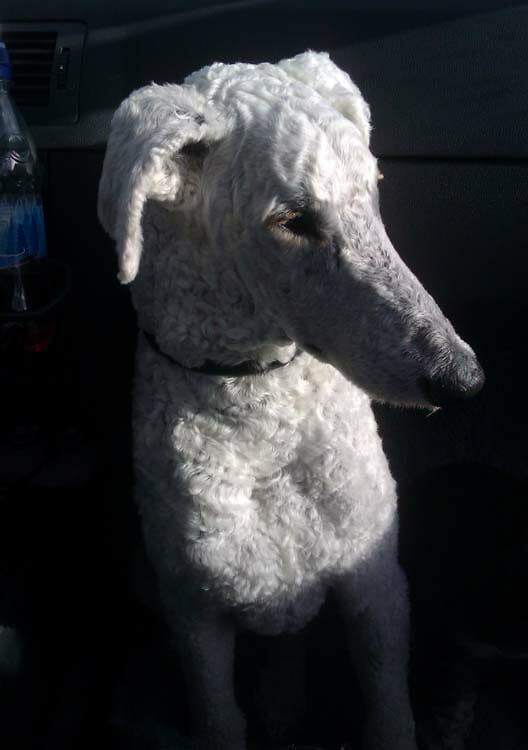 Oktober Solli Hundstallet