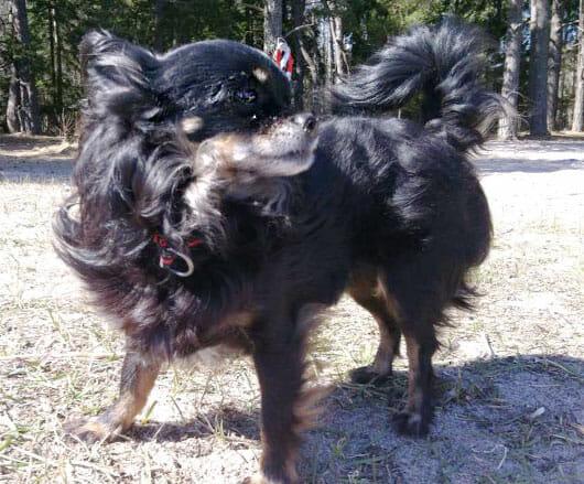 Hunden maggie hemma efter tva manader