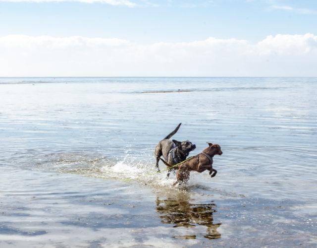 Hundstallet Dalarna